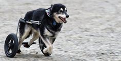 Eddie's Wheels for Pets – The Pet Mobility Experts