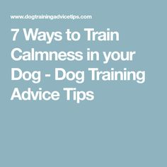 7 Ways to Train Calmness in your Dog - Dog Training Advice Tips