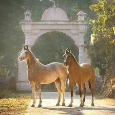 kathiyawadi horse owner-Pushpendraprasad Pande