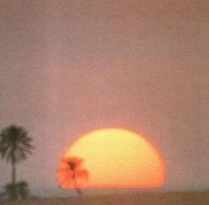 palms and sunsets. retro vintage instant photo sun sunset palms beach sunny pastel old oldsoul oldvibes vibes oldie goodie gold goldie moment Orange Aesthetic, Summer Aesthetic, Aesthetic Vintage, Aesthetic Photo, Aesthetic Pictures, 1970s Aesthetic, Simple Aesthetic, Nature Aesthetic, Aesthetic Songs