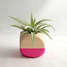 This air plant display has been hand painted neon pink for a natural wood color block effect. The wood planter perfectly compliments and highlights
