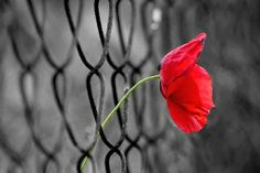 Αέναη επΑνάσταση: Φράχτες συρμάτινοι φαντάζουν οι αποστάσεις...