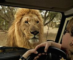 A Secluded South Africa Safari- Staring Into The Eyes Of One Of...