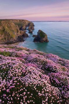 sundxwn:  Bedruthan Pinks by George Edwards