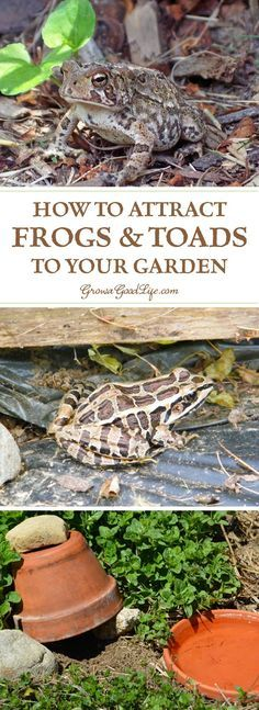 to attract frogs and toads to your garden toad house frog house frog