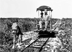 Donkey tramway on Mona Island Puerto Rico History, Puerto Rican Culture, Felder, Puerto Ricans, Old Pictures, Locomotive, Searching, Islands, Roots