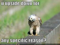 Funny Animal Pictures - View our collection of cute and funny pet videos and pics. New funny animal pictures and videos submitted daily. Funny Birds, Cute Birds, Pretty Birds, Beautiful Birds, Cute Animal Memes, Funny Animal Videos, Animal Funnies, Cute Baby Animals, Funny Animals