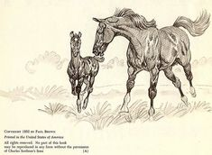 Black Beauty Paul Brown Equestrian Art St Ed Anna - Mar Black Beauty Paul Brown Equestrian Art St Ed Anna Sewell Horses Collectors Vintage Horse Book Illustration More Information Find This Pin And More On Pa Horse Drawings, Animal Drawings, Paul Brown, Horse Sketch, Horse Illustration, Horse Books, Horse Portrait, Vintage Horse, Animal Sketches