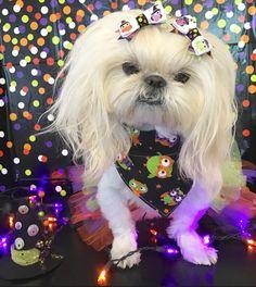 Bella Model, Dogs, Fashion, Dream Bedroom, Moda, Fashion Styles, Pet Dogs, Doggies, Fashion Illustrations