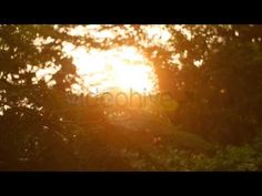 Good Morning 1 - Stock Footage - Full HD 25fps - Clip 0:12  You can more detail at http://videohive.net/item/good-morning-1/5973663?ref=Nuwanhaha