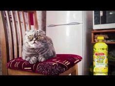 """Pine-Sol Presents: """"Mr. Boddington"""" - YouTube  #cats #funny #ad"""