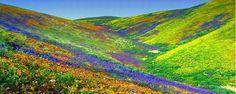Coloridos Campos de Flores                   Vale das Flores, na Índia