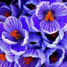 I may not cover her room entirely in purple, but these are gorgeous.
