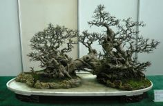 Remarkable penjing