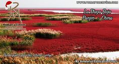 #TasasDeCambio 9:30 a.m $ 2339 - € 2482... LaPlaya Roja, es un lugar ubicado en lasmarismasdel delta delrío LiaoenPanjin(China). Esta reserva natural es un hábitat clave para las aves migratorias en su ruta entre Asia y Australia. El color rojo sólo aparece en aquellas zonas cuyos suelos están compuestos de limos. La tonalidad roja se debe a una especie local de sargadilla marina. Esta planta empieza a brotar entre abril y mayo. Su color verde inicial va virando al rojo.