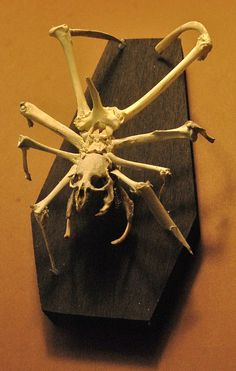 creepy skeleton articulation horror weird by resonanteyes on Etsy, $130.00