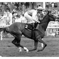 Bahamian(1985)(Filly)Mill Reef- Sorbus By Busted. 3x4 To Princequillo, 4x5 To Count Fleet, 5x5 To Blenheim II. 7 Starts 1 Win 2 Seconds 2 Thirds. $62,635. Won Oaks Trial S(Eng), Prix De Pomone(Fr-2), 3rd Park Hill S (Eng-2), Prix De L'Esperance(Fr-2). Dam Of Wemyss Bight, 2nd Dam Of Green Desert.