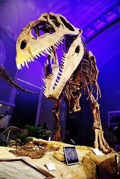 #Giganotosaurus #theropod #dinosaur