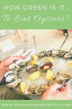 Because it can take three or more years for an oyster to reach maturity, and because of the way oysters feed and live, the flavor of an oyster is dependent on the land and water around them. Like wine and olive oil, oysters have a unique terroir - that fancy word foodies like to swoon over. But besides being fancy, tasty and healthy, what is the environmental impact of eating oysters? Follow the link to find out! >>> #oysters #environment #ecofriendlyfood #sustainablefood #food #healthyeating Raw Oysters, Sustainable Food, Sustainable Living, Eating Raw, Healthy Eating, Peanut Butter Jar, Green Products, Super Greens