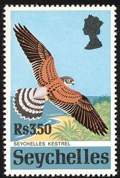 Islas Seychelles-El Cernícalo de las Seychelles es una pequeña ave de presa que pertenece al género Falco en la familia de los halcones. Es endémica de las Islas Seychelles.