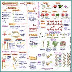Mapa mental que resume as principais substancias químicas que compões e participam das atividades celulares.