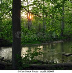 The sun going down through the trees beside a river.