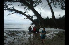 Fallen down tree on a beach in the Solomon Islands