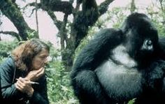 Dian Fossey with Digit, her favorite gorilla                                                                                                                                                                                 More