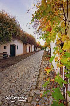 Der Herbst bietet so einige schöne Tage, die man draußen in der Natur verbringen möchte. Wir haben den perfekten Tipp, um die letzten Sonnenstrahlen so richtige auszukosten. Mach dich auf den Weg ins Weinviertel und erkunde die Kellergassen der Region bei einem Herbst-Spaziergang. In ausgewählten Kellergassen werden sogar sogenannte Kellergassenführungen angeboten. Was das ist und wo du die schönsten Kellergassen findest, erfährst du hier. © Weinviertel Tourismus