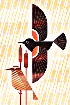 Scott Partridge Tricolored Blackbird, Agelaius tricolor, one of a series of illustrations for the Bird Genoscape Project. Bird Illustration, Illustrations, Arte Pop, Art Plastique, Fabric Painting, Bird Art, Photo Art, Folk Art, Graphic Art