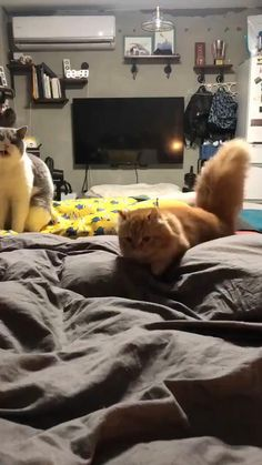 Cute Baby Cats, Cute Little Animals, Cute Cats And Kittens, Cute Funny Animals, I Love Cats, Crazy Cats, Kittens Cutest, Funny Cats, Beautiful Cats