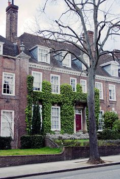 Perfect city residence...but risky if you use English ivy.  Would recommend Boston ivy