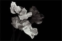 farblos von Christine Ellger