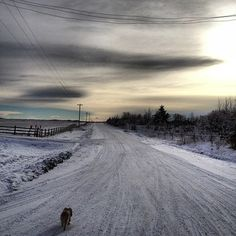 Jann Arden's road