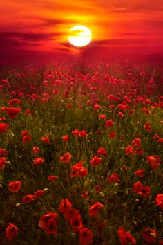 Crimson Sunset!!! ❤❤❤
