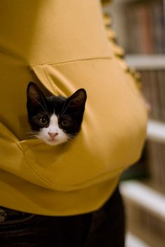 I had a cat who would ride in my hoodie like this.
