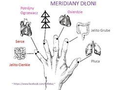 meridiany dloni