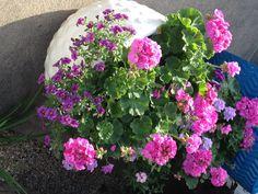 J'ai Fracture, Plants, Gardens, Fire, Accessories, Home, Flora, Plant, Planting