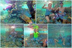 A lot of Fish at Nalusuan Island Resort!