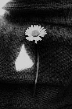 Sweet Daisy ❤