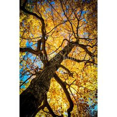 Autumn Tree Photo Gorgeous Bright Fall Colours Woods Photo Fine Art... (35 RON) ❤ liked on Polyvore featuring beauty products and fall
