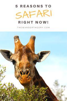 5 Reasons to Self Drive Safari Right Now! THE WANDER THEORY #africansafari #safari #southafrica #botswana