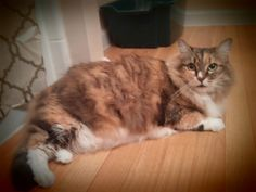 RIP to my sweet Pumpkin. She furever has a place in my heart.   http://ift.tt/1PYzHaB via /r/cats http://ift.tt/1Yo8gIW  cats funny pictures