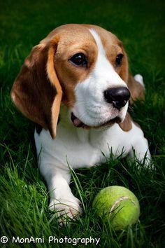 Beagle http://ift.tt/2dCMhi6