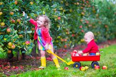 Kids playing in an apple garden. Happy little children, cute toddler girl and ad , Activities In Nyc, Autumn Activities, Family Activities, Brisbane Kids, Cute Toddlers, Fall Family, Traveling With Baby, Funny Babies, Kids Playing