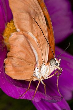 #pestcontrol Montreal #butterfly #macro photo: Butterfly macro