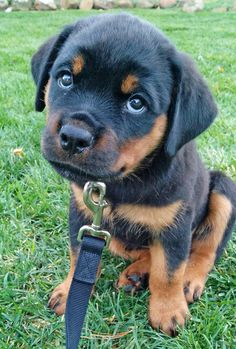Daily Puppy