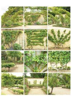 Espalier, I have always loved this elegant style of growing fruit trees Espalier Fruit Trees, Trees And Shrubs, Plantas Bonsai, Flower Garden Design, Flowers Garden, Garden Structures, Edible Garden, Dream Garden, Garden Planning