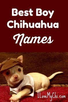 Best Boy Chihuahua Names Via Cathyratcliffe Chihuahua Names Dog Names Chihuahua Names Boys