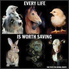 Every life is worth saving. Go #vegan